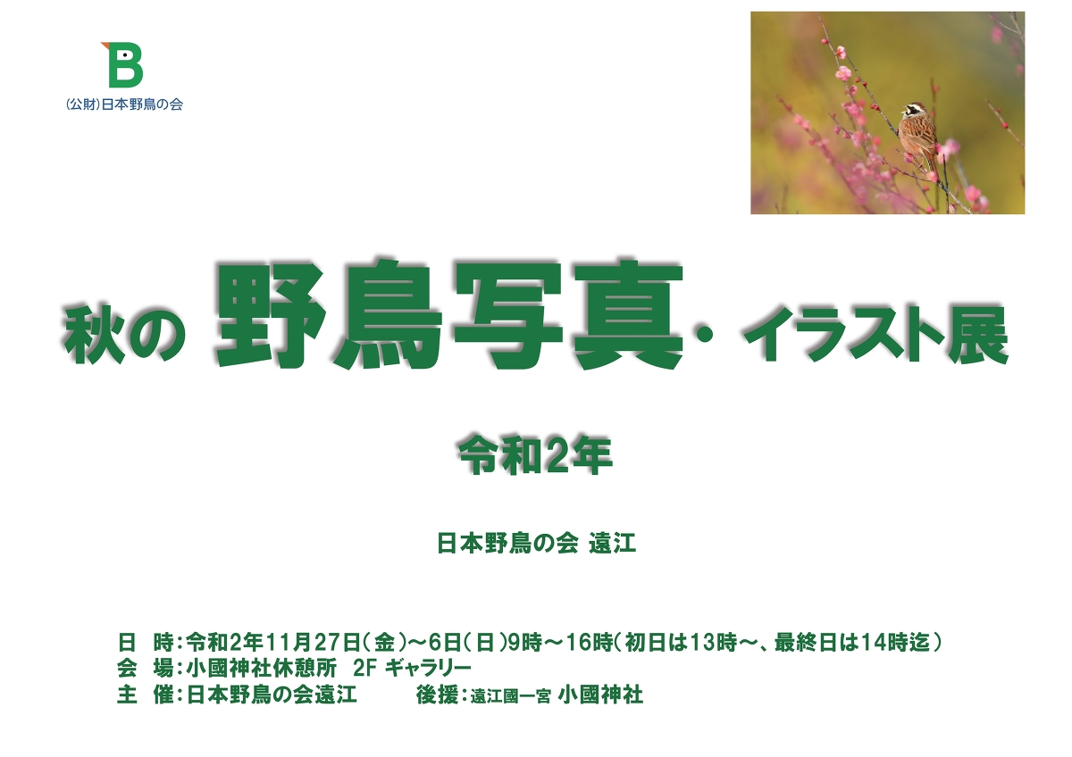 「令和2年 秋の野鳥写真・イラスト展」開催のお知らせ ◇11月27日(金)~12月6日(日)◇