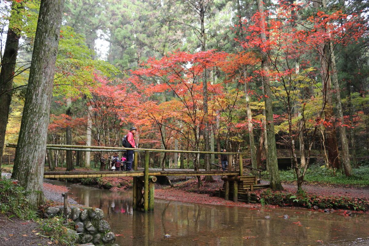 平成28年 小國神社 紅葉情報⑧「斑紅葉」(場所により見頃 濃淡まだらに色づいています)