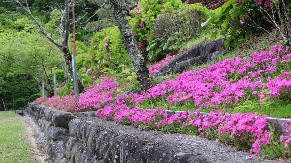 斎庭の草花 シラン・フタリシズカなどが開花しています。◆明治天皇御製(ぎょせい)・昭憲皇太后御歌(みうた)に親しむ◆